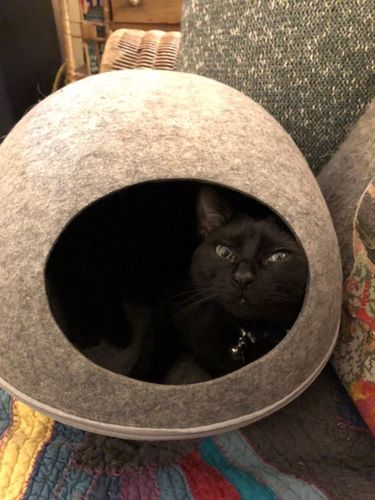 Cat Cocoon Bed   Reviews