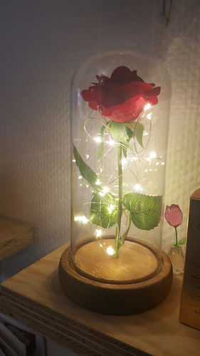 Enchanted Rose Flower Lamp   Reviews
