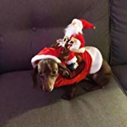 Marylin Y. review of (BUY 2 GET FREE SHIPPING) Royal Wise Running Santa Christmas Pet Costumes
