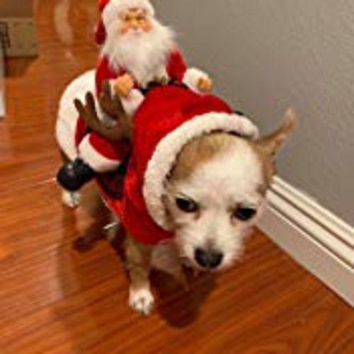 Julie K. review of (BUY 2 GET FREE SHIPPING) Royal Wise Running Santa Christmas Pet Costumes