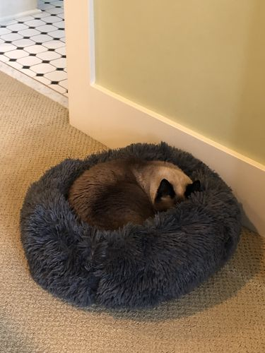 Brian T. review of Marshmallow Cat Bed [HOT Selling!]