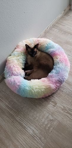 Dj L. review of Marshmallow Cat Bed [HOT Selling!]