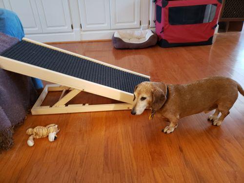 Dachshund Dog Ramp Sausage Dog Central