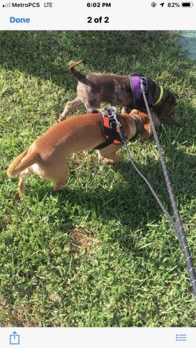World's Best Dog Harness - 2019 Version