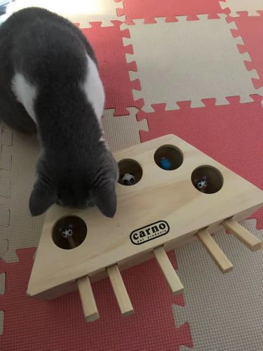 Clarita S. review of Wooden Cat Hit Gophers Toys