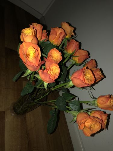 Suzanne R. review of Deluxe Sunset Roses