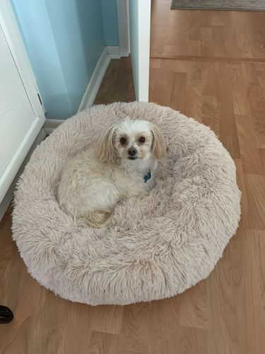CozyDream™ Pet Bed